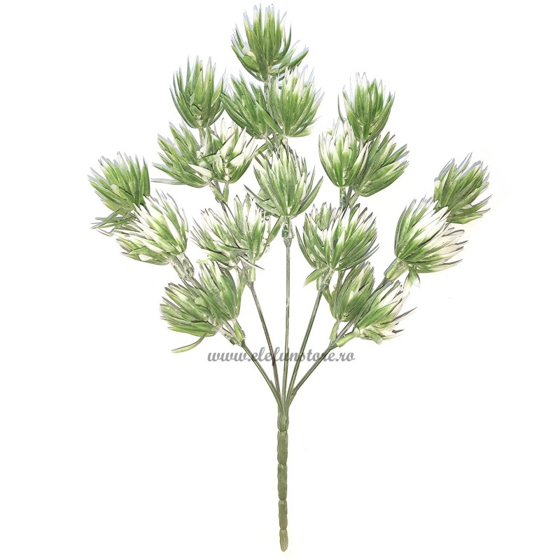 Buchet 25 plante suculente, 5 fire 32 cm