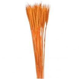 Spice de grau portocalii 65 cm