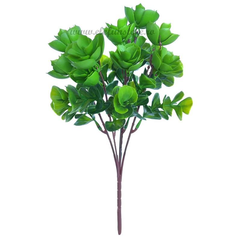 Buchet plante suculente, 5 fire 30 cm
