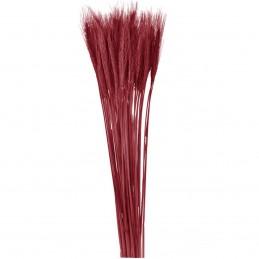 Spice de grau burgundy 65cm, 150g