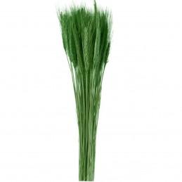 Spice de grau verde inchis 65cm, 150g