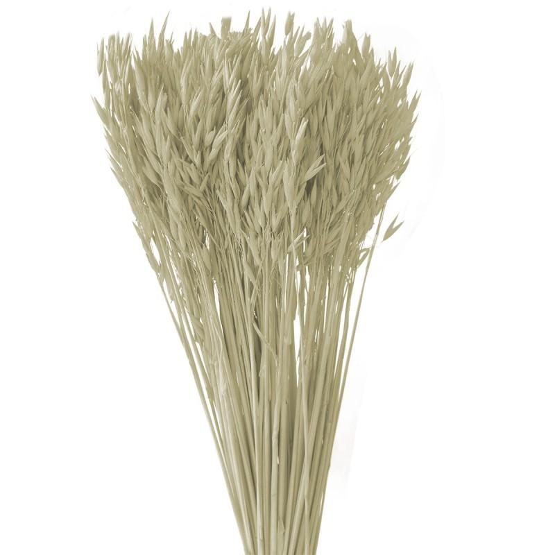 Ovaz alb decolorat 60cm, 150g