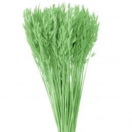 Ovaz verde deschis 60cm, 150g