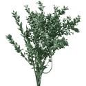 Ruscus Verde Inchis 70cm, 220g