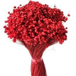 Glixia Marcela rosu 30cm, 75g
