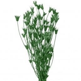 Nigella Orientale verde inchis 60cm, 100g
