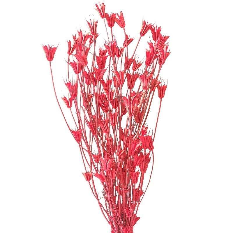Nigella Orientale rosu 60cm, 100g