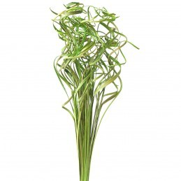 Curly ting ting verde 45cm, 50g