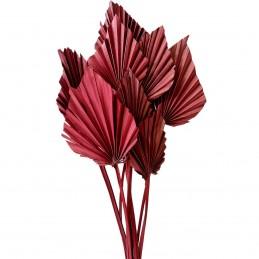 Frunze de palmier taiate burgundy 55cm, 9buc