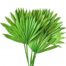 Frunze de palmier soare verde deschis 50cm, 7buc