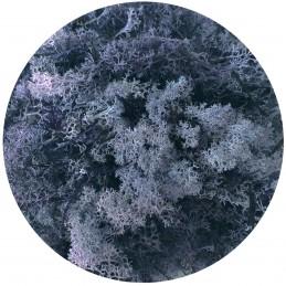 Muschi islandez albastru, licheni stabilizati 250g