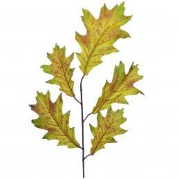 Creanga de Stejar Galbena...