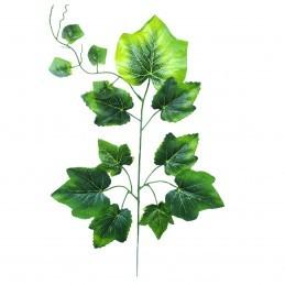 Creanga Vita de Vie verde...