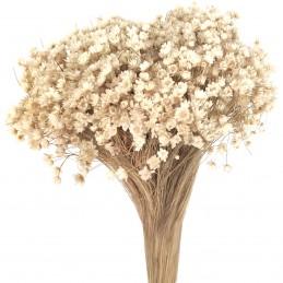 Glixia Marcela alb natural...