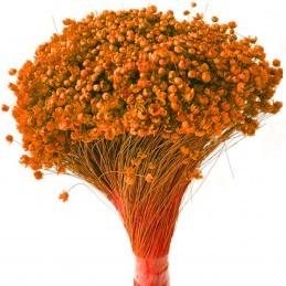 Glixia Marcela portocaliu...