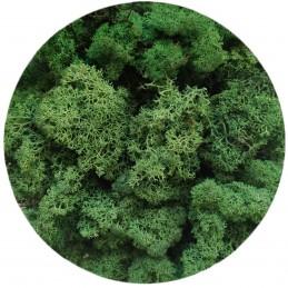 Muschi islandez verde...
