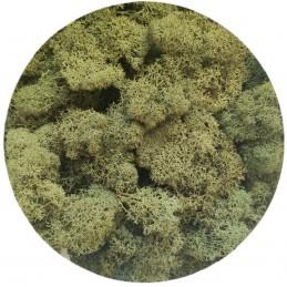 Muschi islandez verde moss,...