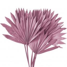 Frunze de palmier soare roz...