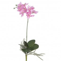 Orhidee roz cu frunze, fir...