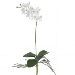 Orhidee alba cu frunze, fir...