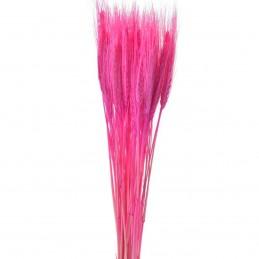 Spice de grau roz 60cm