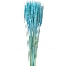 Spice de grau bleu 60cm
