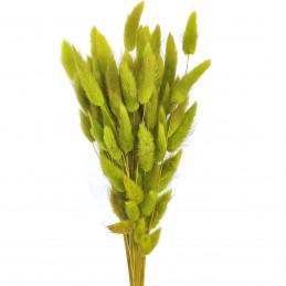 Lagurus verde deschis 60cm,...