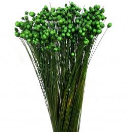Glixia Temporona verde...