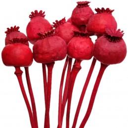 Mac rosu vopsit 35cm