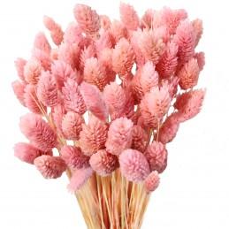 Phalaris, mei roz deschis 45cm