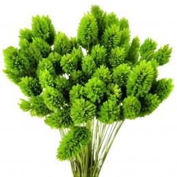 Phalaris, mei verde deschis...