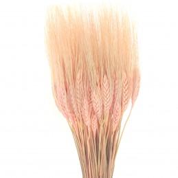 Spice de grau roz pal 60cm