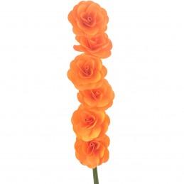 Set 6 Begonii portocalii...