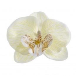 Cap orhidee alba...