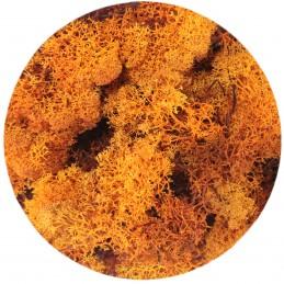 Muschi islandez portocaliu,...