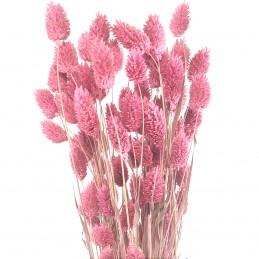 Phalaris, mei roz vintage 45cm