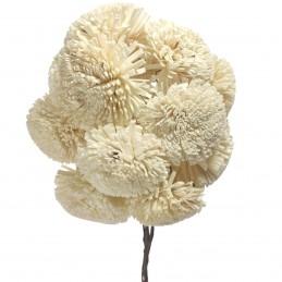 Set 15 crizanteme ming alb...