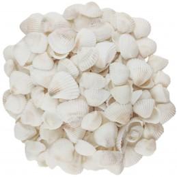 Scoici albe ornamentale...