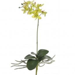 Orhidee verde deschis cu...