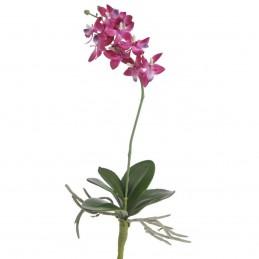 Orhidee magenta cu frunze,...