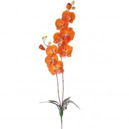 Orhidee portocalie 8 cupe...
