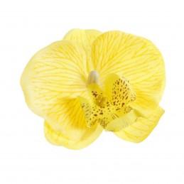 Cap orhidee galbena...