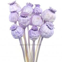 Mac lila vopsit 35cm