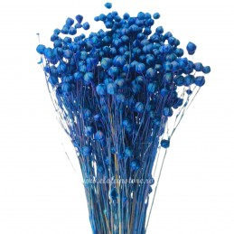 In albastru, plante uscate...