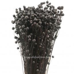 In negru, plante uscate 60cm