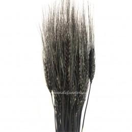 Spice de grau negre 60cm